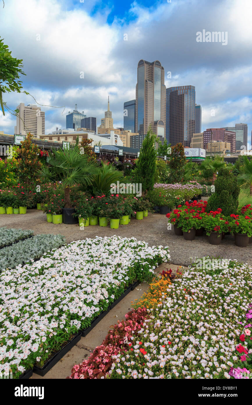 colourful, Dallas, Farmers Market, garden center, nursery, Ruibal, skyline, Texas, USA, United States, America, - Stock Image