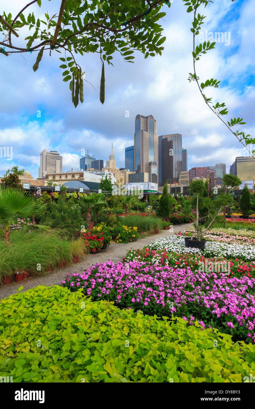 Nice Colourful, Dallas, Farmers Market, Garden Center, Nursery, Ruibal, Skyline,  Texas, USA, United States, America,