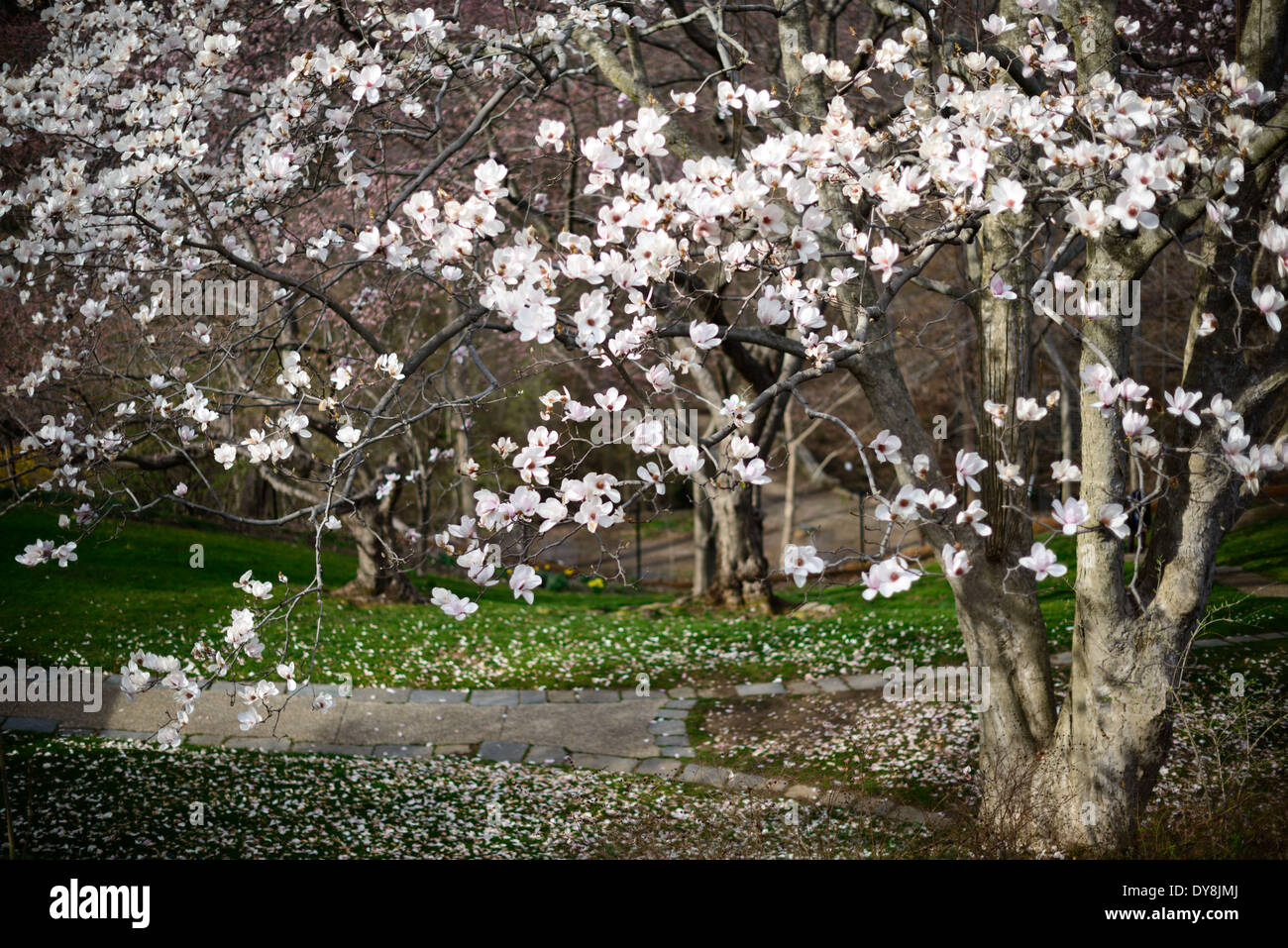 WASHINGTON DC, USA - The gardens at Dumbarton Oaks, an historic estate in the heart of Washington DC's Georgetown neighborhood. It was the residence and gardens of Robert Woods Bliss (1875–1962) and his wife Mildred Barnes Bliss (1879–1969). - Stock Image