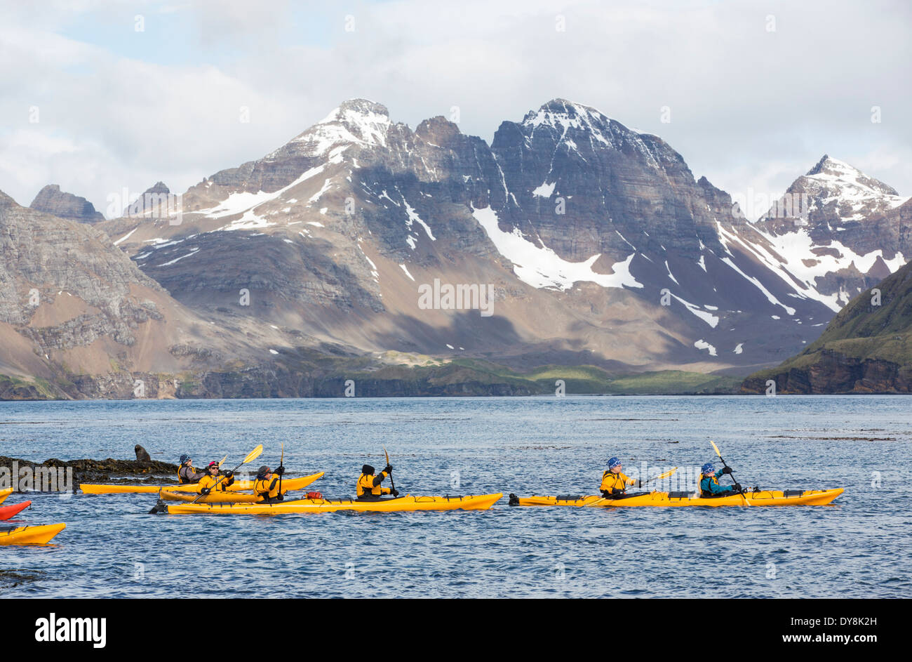 Tourists sea kayaking on Prion Island, South Georgia, part of an Antarctic cruise. - Stock Image