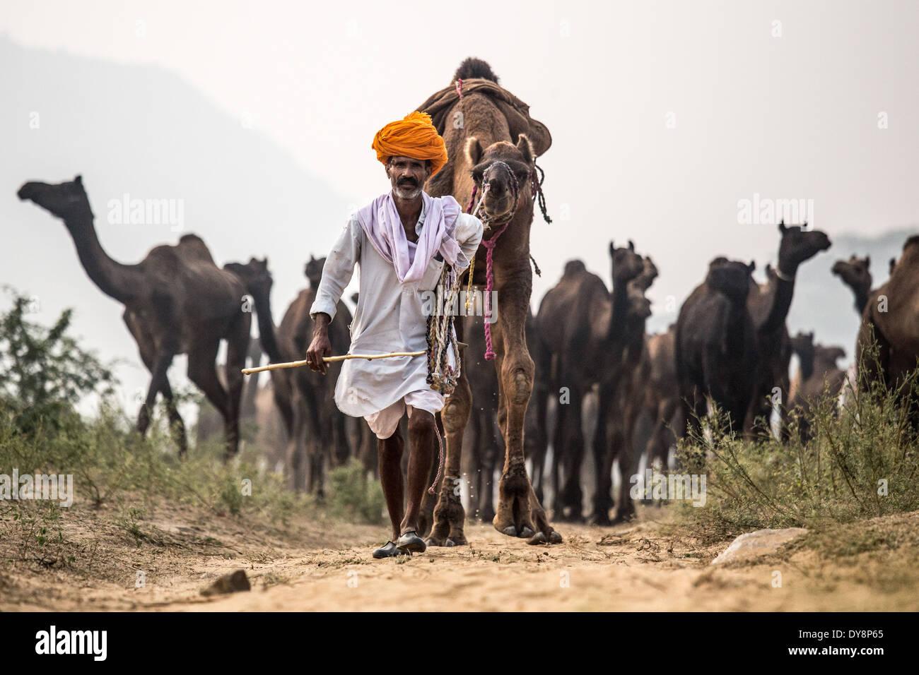 Pushkar Camel Mela, Pushkar, Rajasthan, India - Stock Image