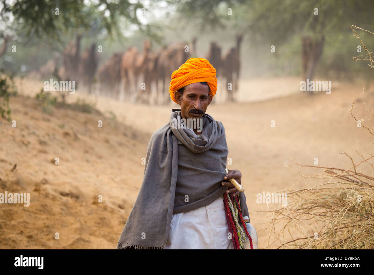 e49dce7ef0d Camel Wearing Hat Stock Photos   Camel Wearing Hat Stock Images - Alamy