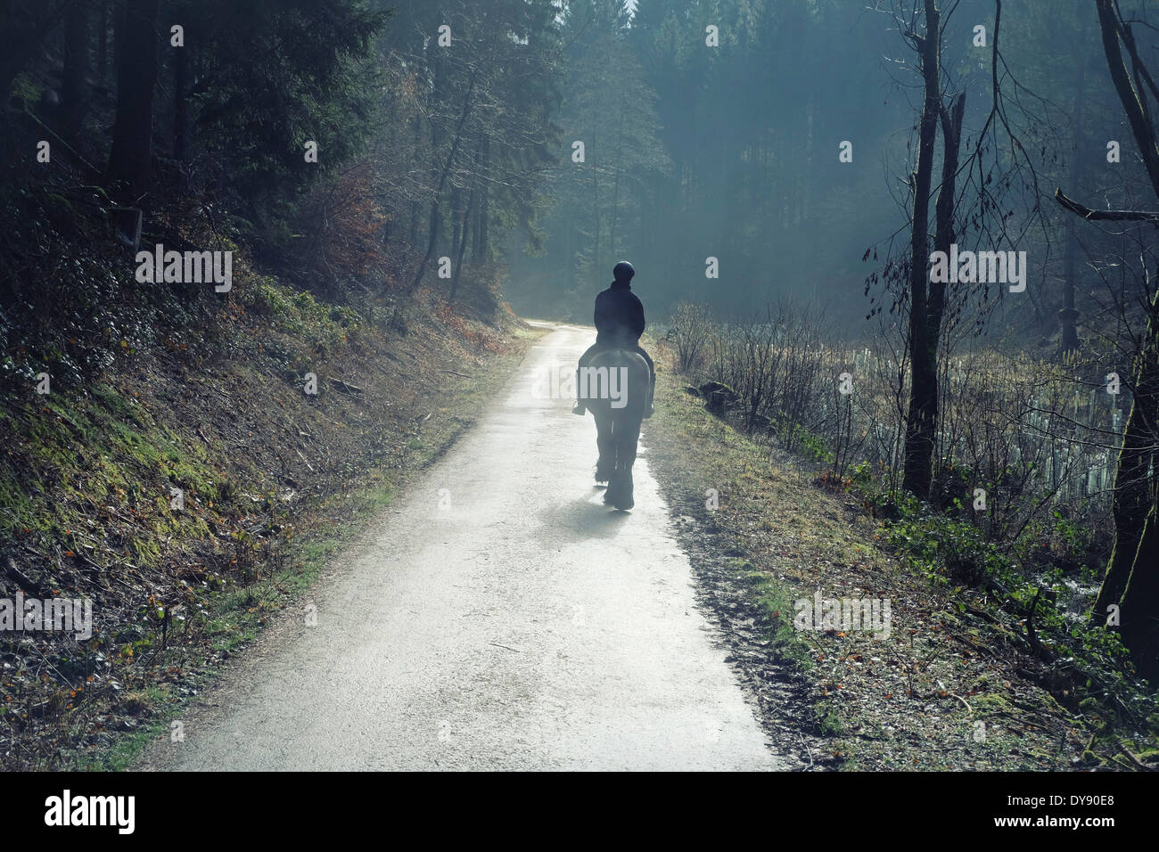 Germany, North Rhine-Westphalia, Bergisches Land, Rhein-Sieg-Kreis, lonely rider on forest track, view from the back - Stock Image