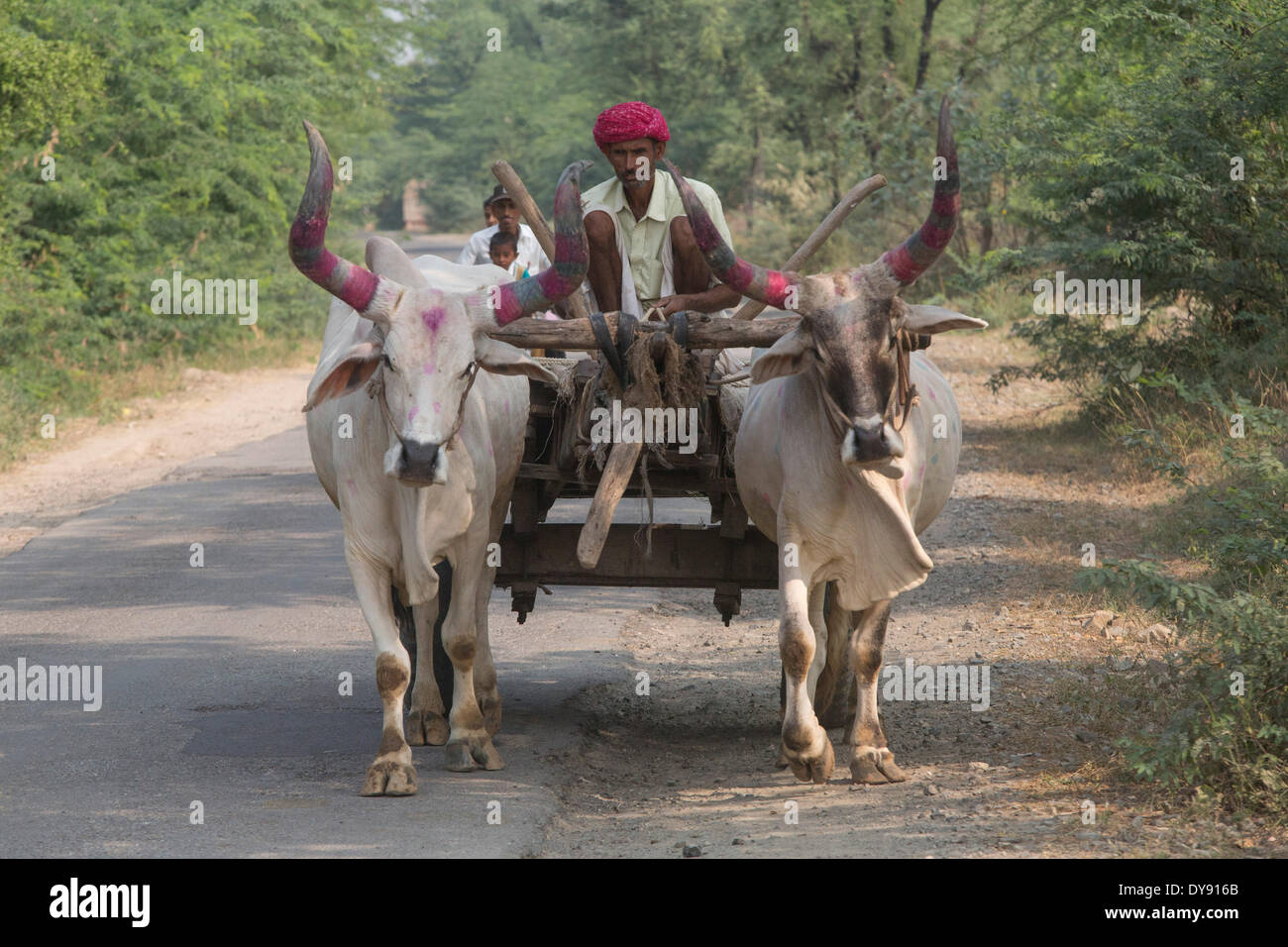 Agriculture, India, Asia, India, agriculture, carts, oxen, cows - Stock Image