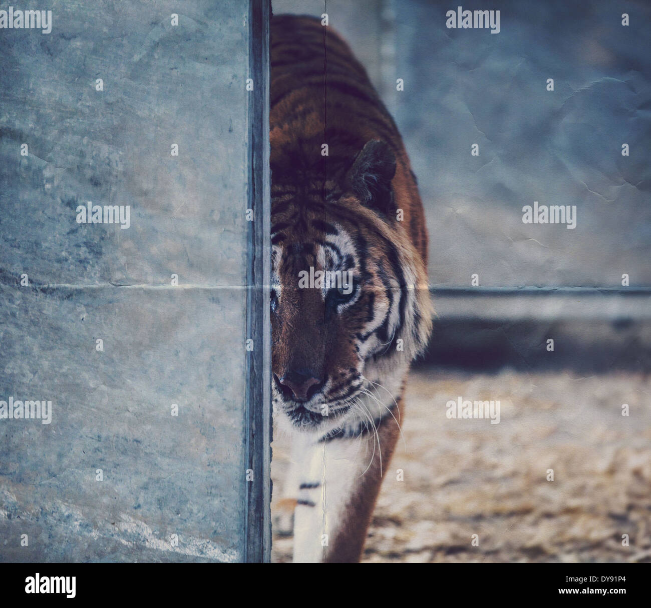 Paper Tiger Stock Photos & Paper Tiger Stock Images - Alamy