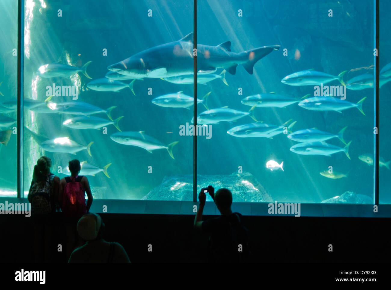 Two Oceans Aquarium - Stock Image