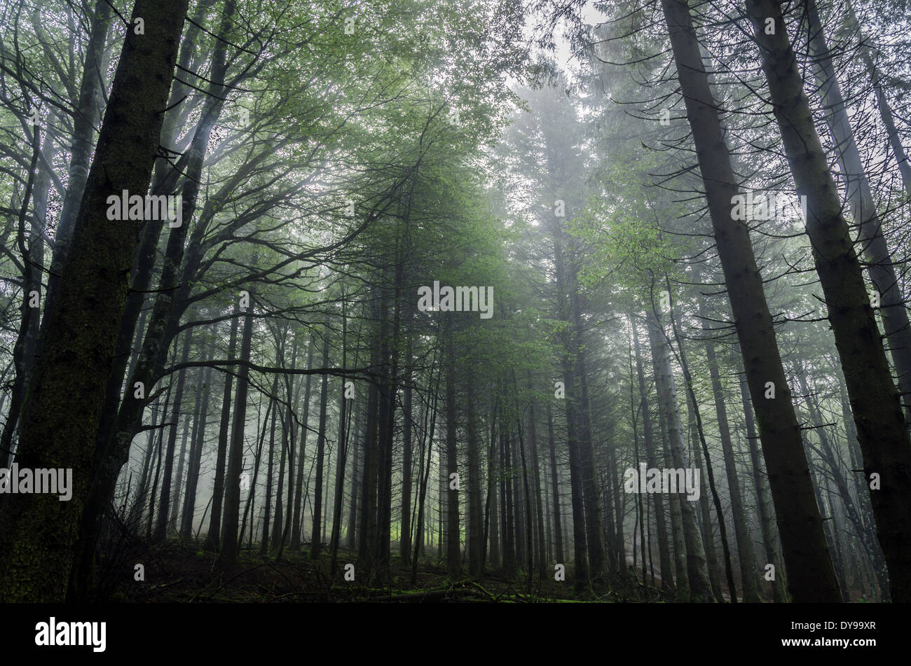The dark forest - Stock Image