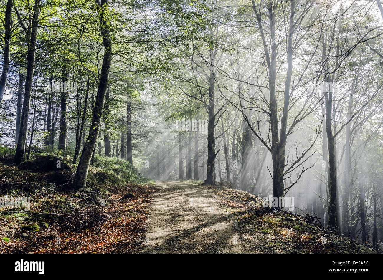 Mystic road in the fogy forest Stock Photo