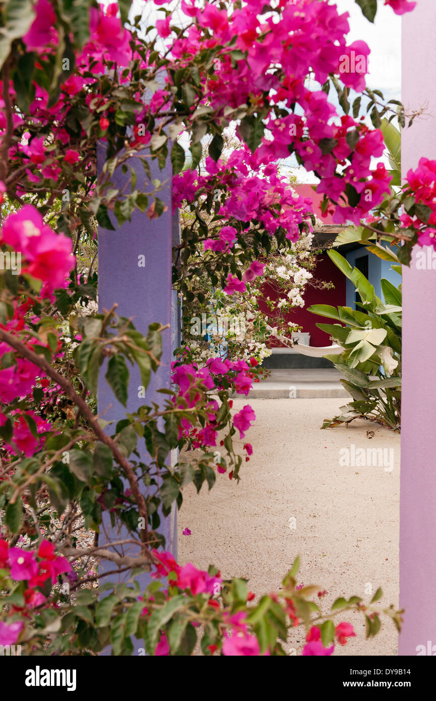 Pink bougainvillea in courtyard of mexican boutique hotel Hotelito - Stock Image