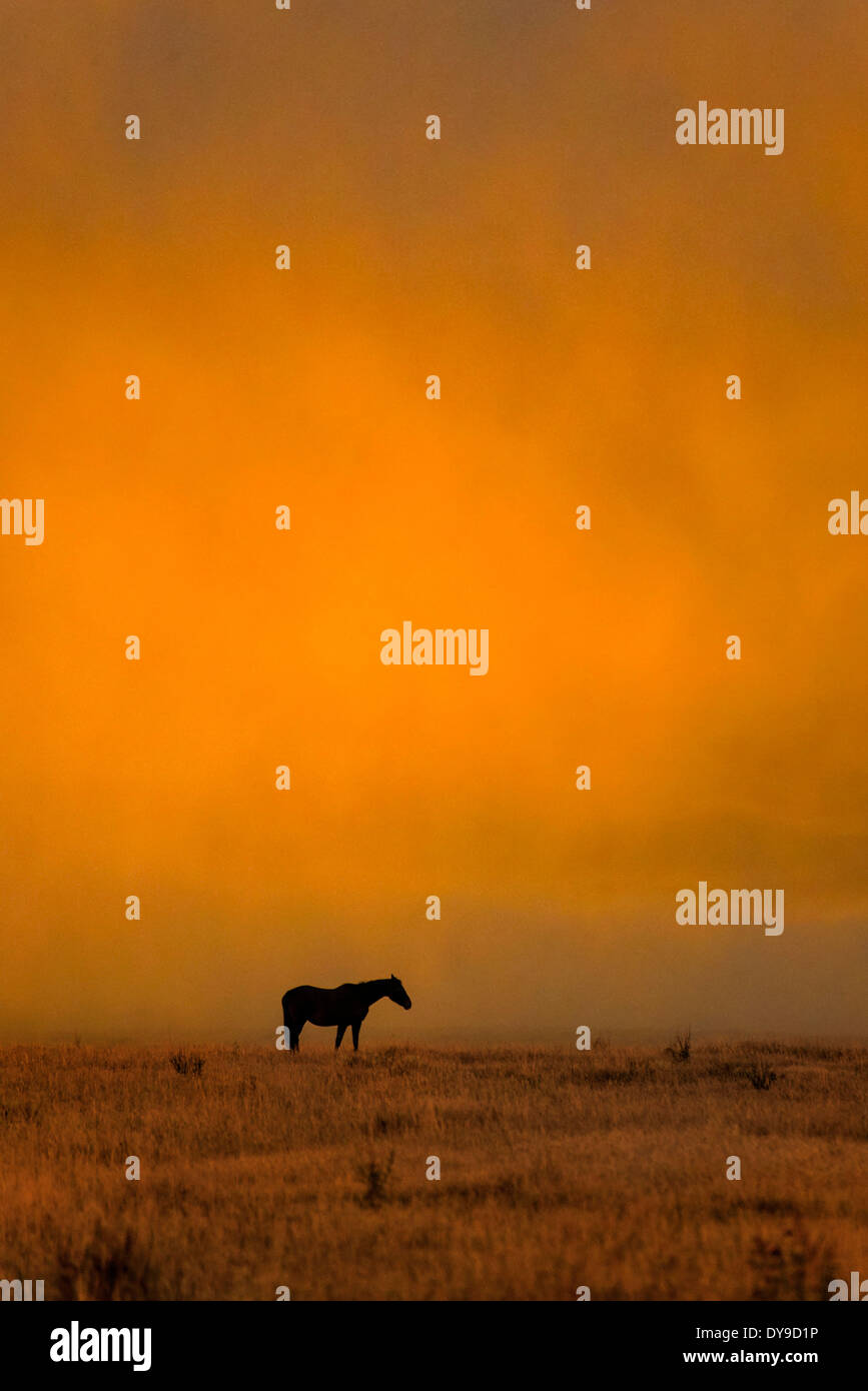 Horse, horses, Grand Teton, National Park, Wyoming, USA, United States, America, free, animal, landscape, prairie, Stock Photo