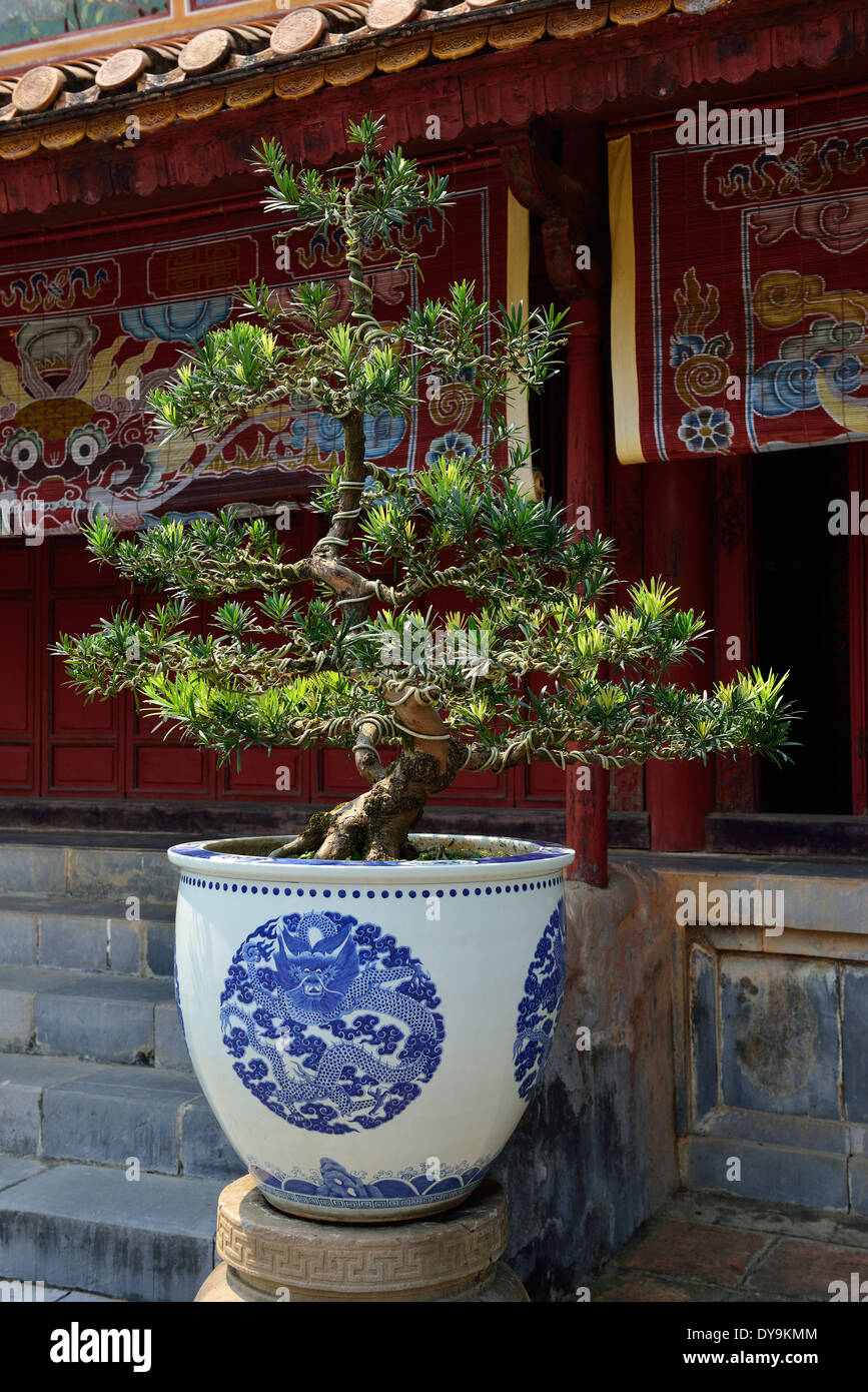 Chinese Bonsai Tree Or Chinese Penjing Growing In A Vase In The Stock Photo Alamy
