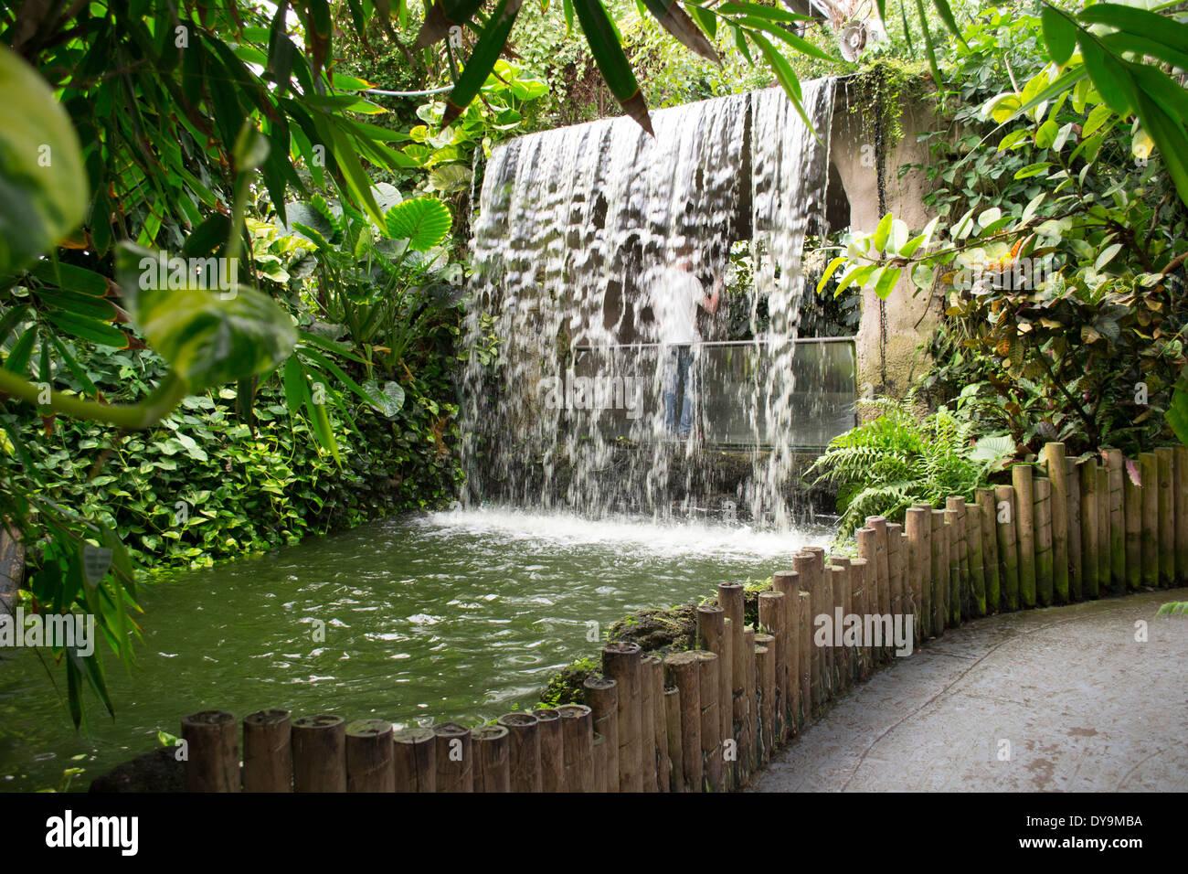 Waterfall in Tropical World, Leeds - Stock Image