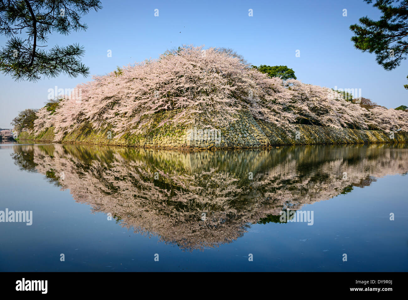 Castle outter moat during the spring season in Hikone, Japan. - Stock Image