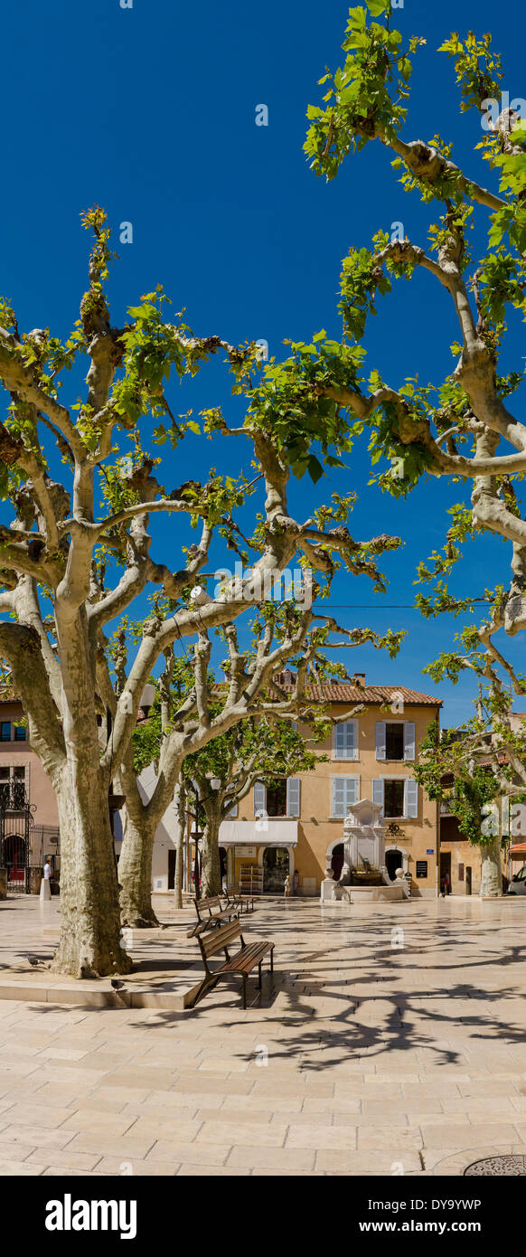 Planes, Place Baragnon, town, village, forest, wood, trees, spring, Cassis, Bouches du Rhone, France, Europe, - Stock Image