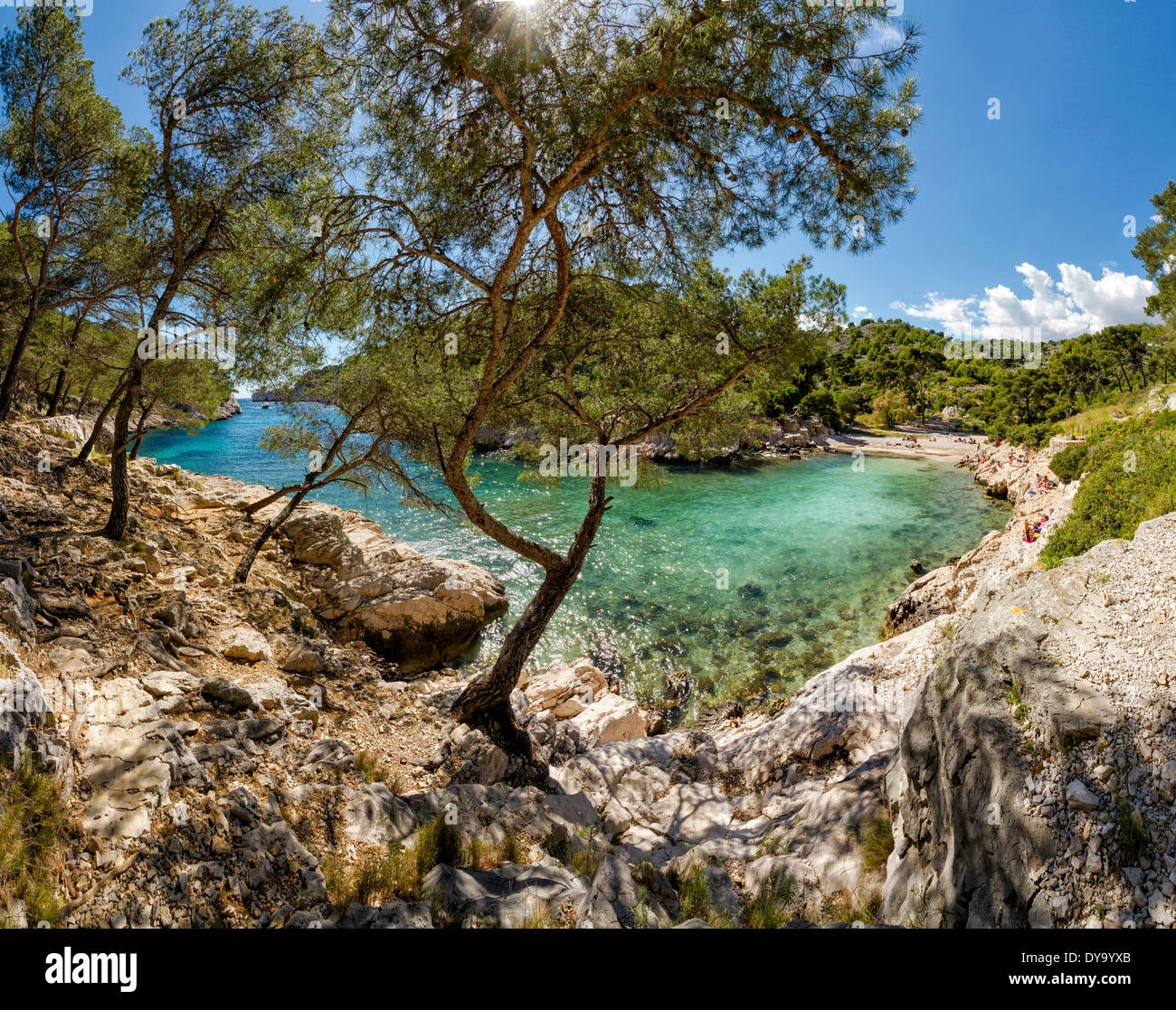 Calanque de Port Pin calanque rocky bay landscape water trees spring mountains sea Cassis Bouches du Rhone France Europe, - Stock Image