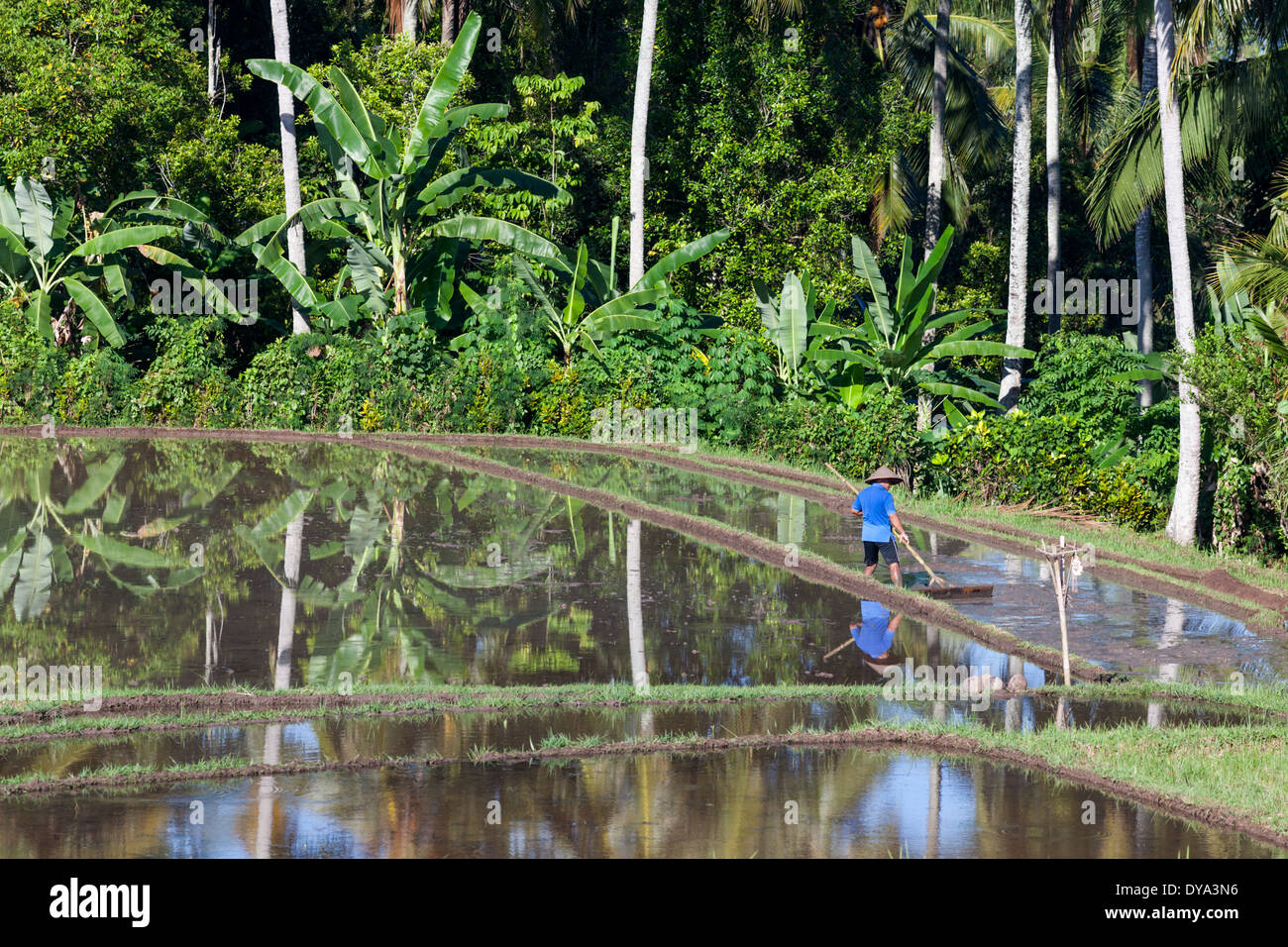 Man working on rice field in region of Antosari and Belimbing (probably closer to Antosari), Bali, Indonesia - Stock Image
