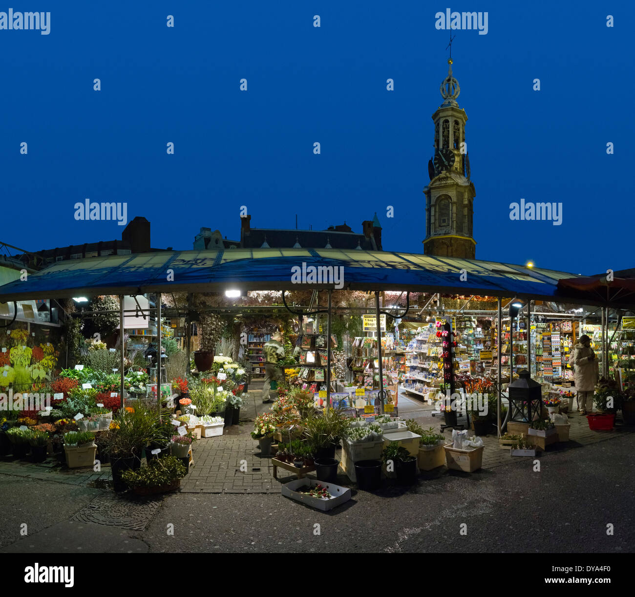 Netherlands, Holland, Europe, Amsterdam, North Holland, city, village, flowers, winter, evening, Flower market, market, Singel - Stock Image
