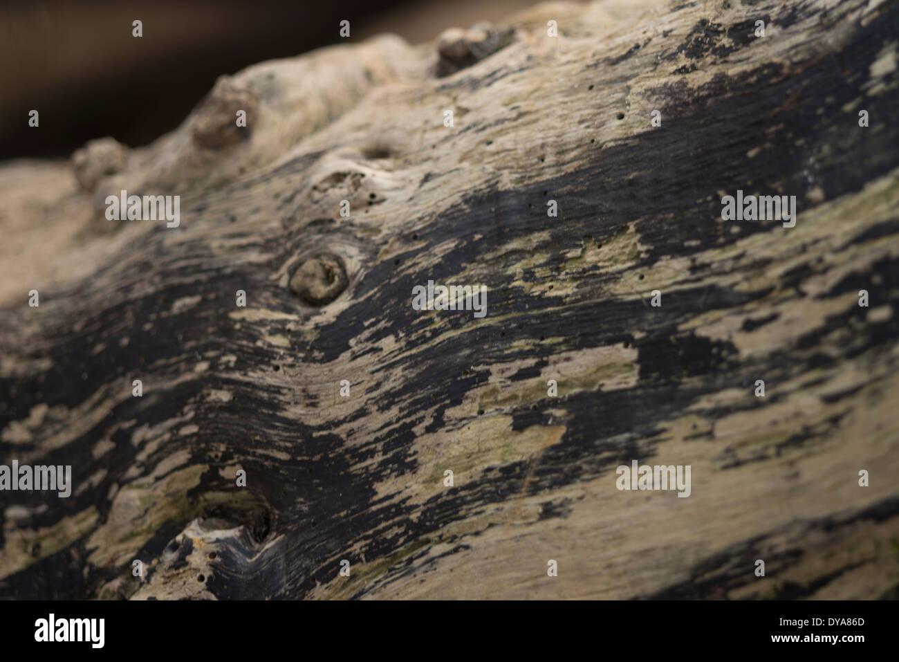 Close up of tree bark, burnt tree, texture, colour photograph, - Stock Image