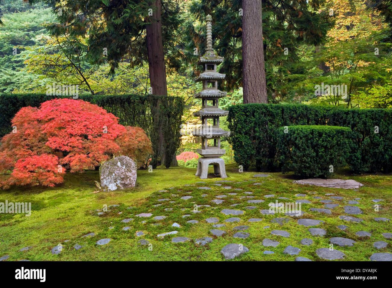 Pagoda Lantern Lantern Japanese Maple Fall Maple Maples Fall Colour  Portland Garden Japanese Garden Zen Oregon