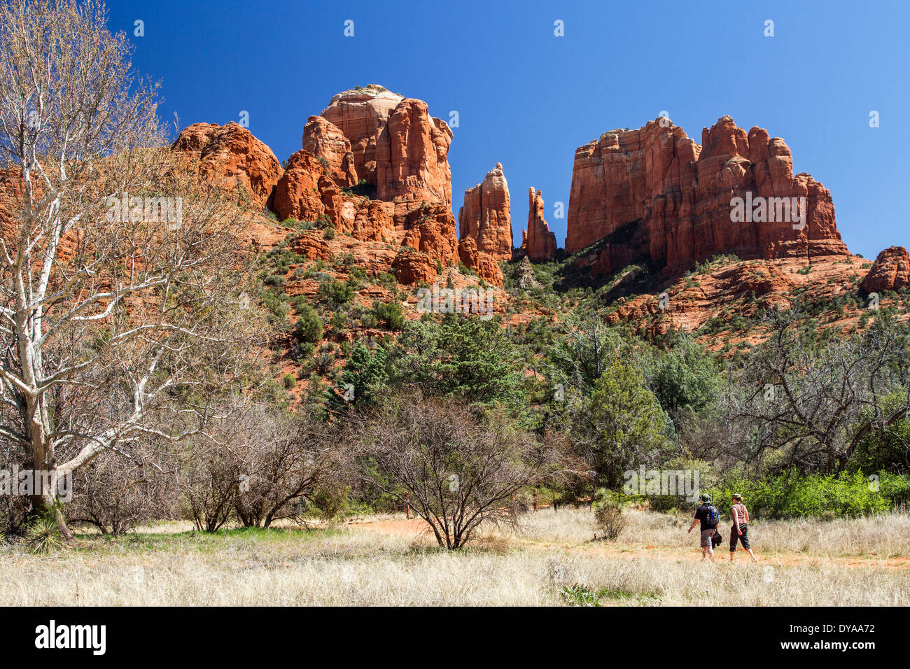 Cathedral Rocks, Sedona, Arizona, USA - Stock Image