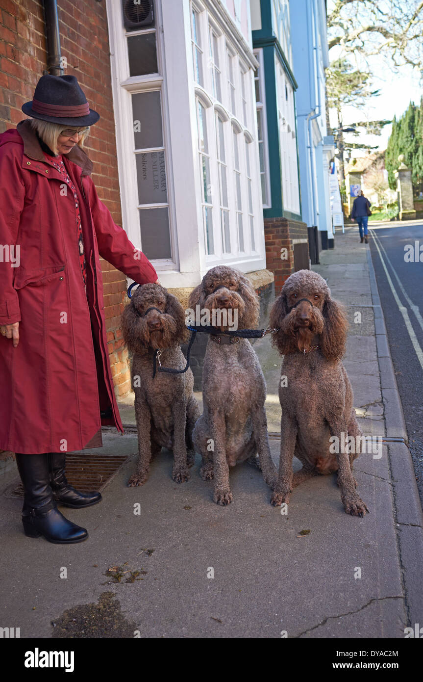 Woman with poodles - Stock Image