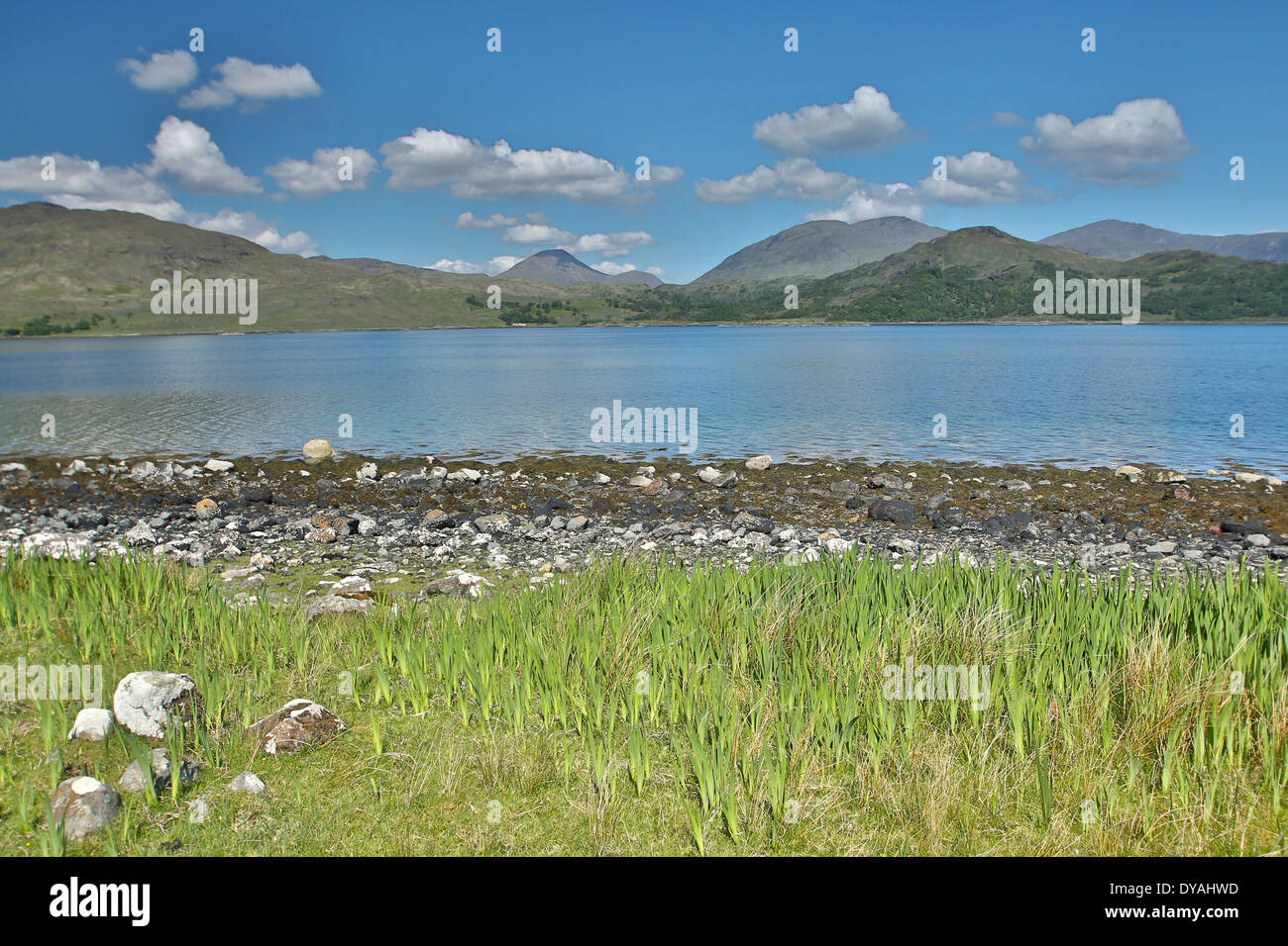 View taken along the shoreline @ Loch Spelve, Isle Of Mull with Ben More in the distant background. - Stock Image