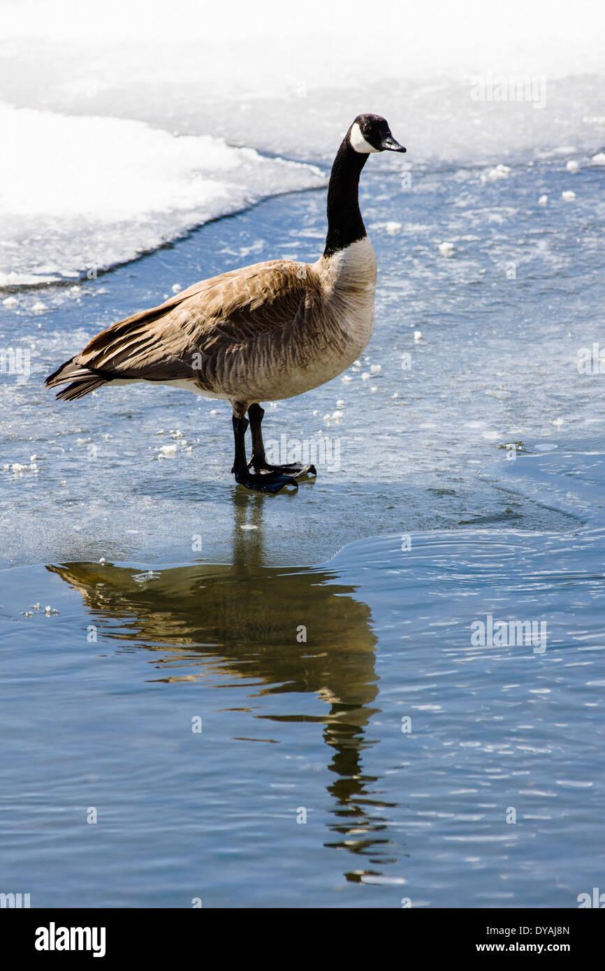 canada goose rea 70