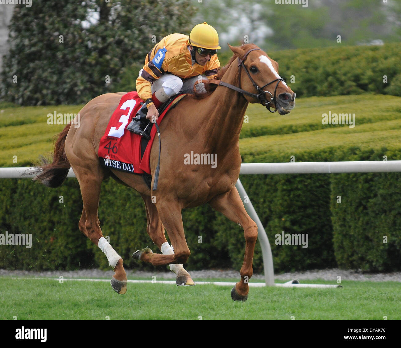 Lexington, KY, USA. 11th Apr, 2014. Aoril 11, 2014: Wise Dan and jockey John Velazquez win the G1 Maker's 46 Mile at Keeneland for trainer Charles LoPresti and owner Morton Fink.Jessica Morgan/ESW/CSM/Alamy Live News - Stock Image