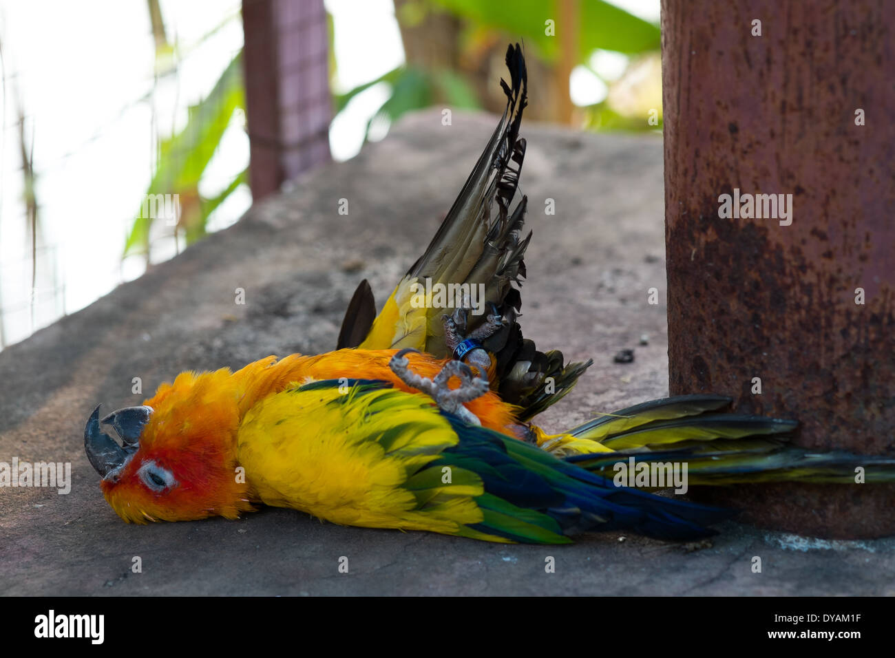 Dead Parrot - Stock Image