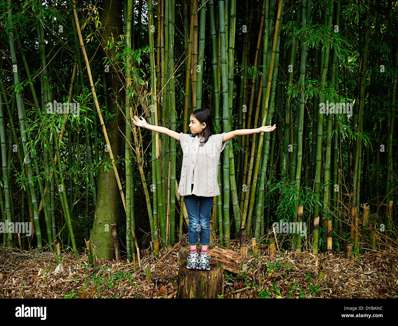 Girl stands on tree stump in stand of bamboo - Stock Image