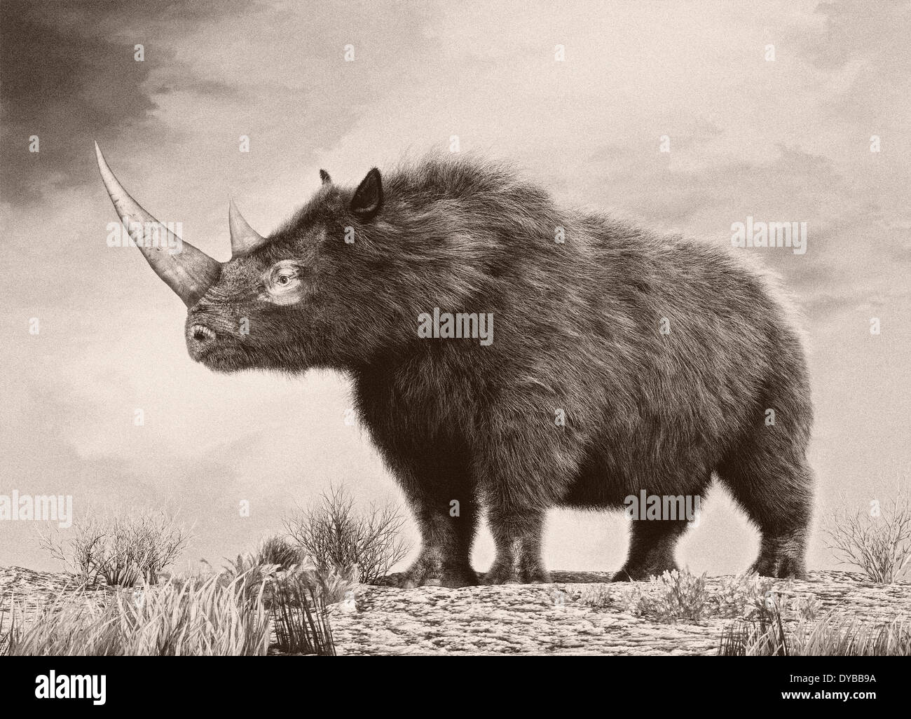 The woolly rhinoceros is an extinct species from the Pleistocene epoch. - Stock Image