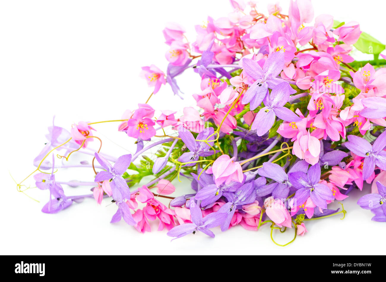 Summer Flowers Background Pink And Purple Flower Isolated On A