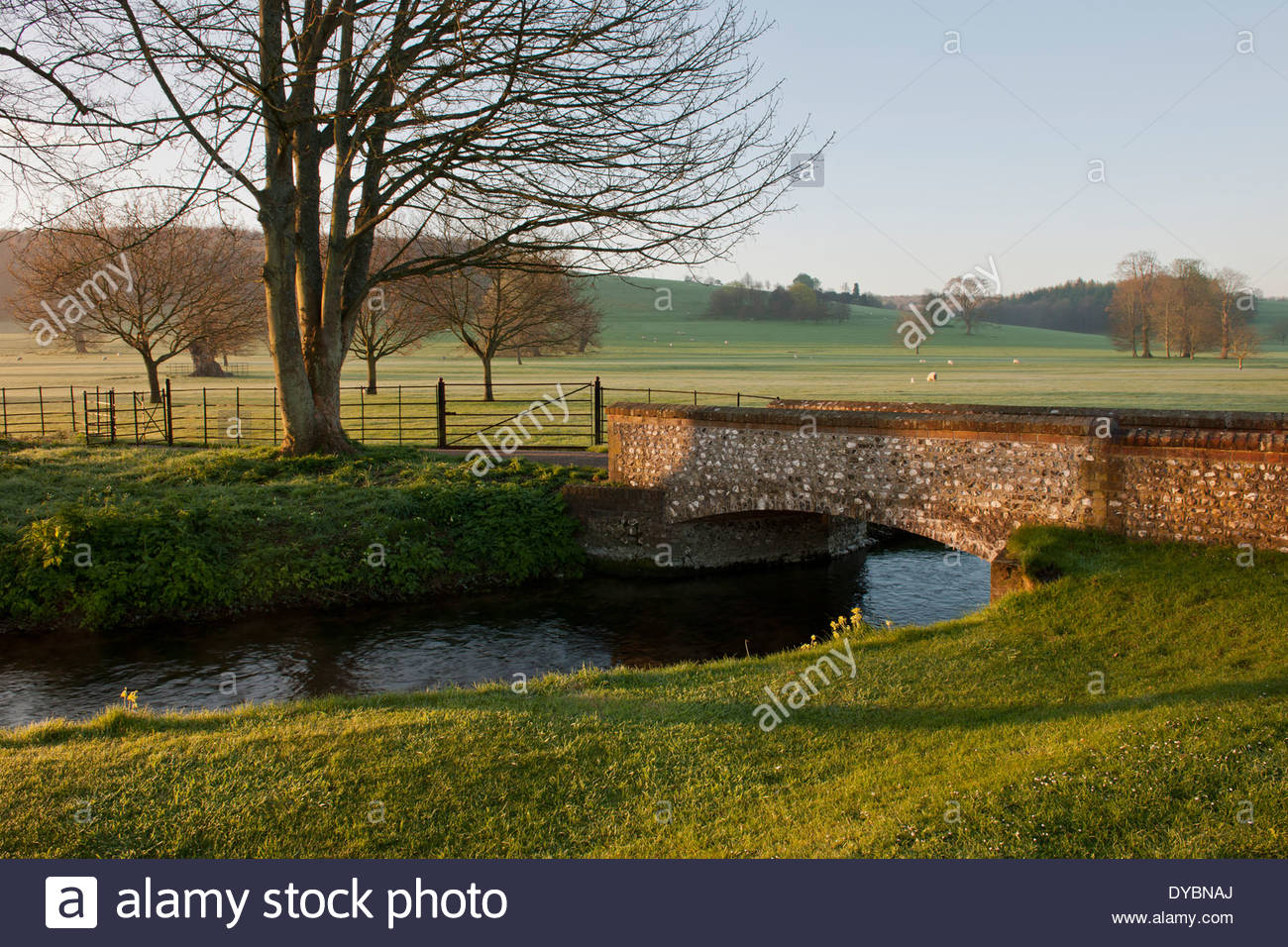 stream stone bridge parkland bare trees grass sheep view sun sunny blue sky south downs West Dean college Sussex rural country - Stock Image
