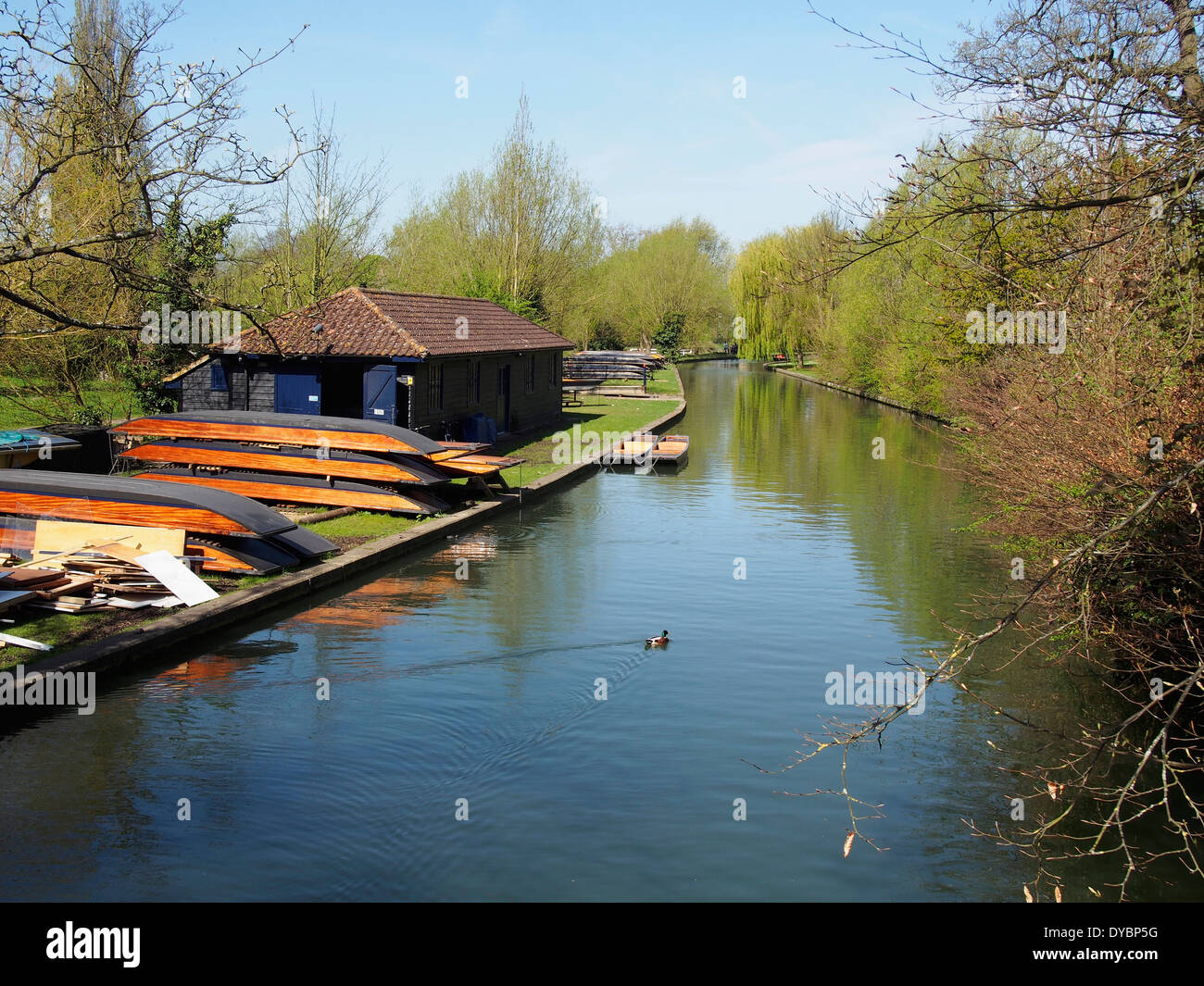 A quiet and tranquil section of the River Cam by Coe Fen in the centre of Cambridge, England with punts hauled out of the water. - Stock Image