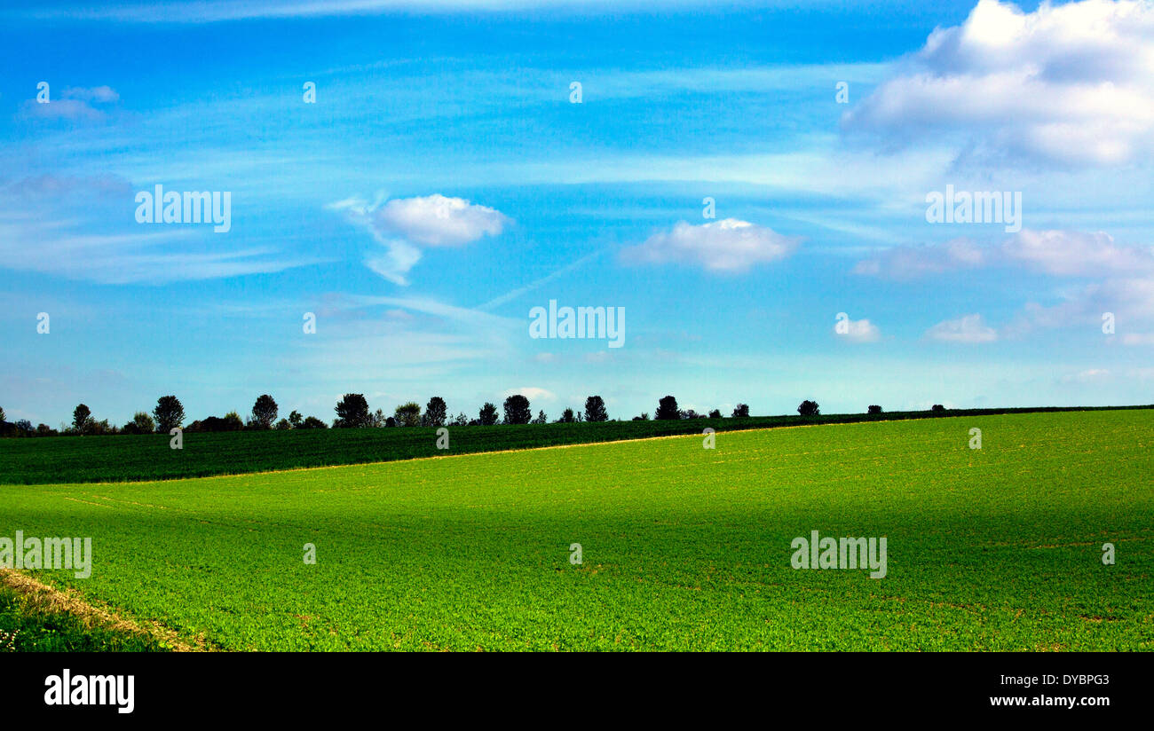 xp windows copy scene Blue sky fluffy white clouds green field country - Stock Image