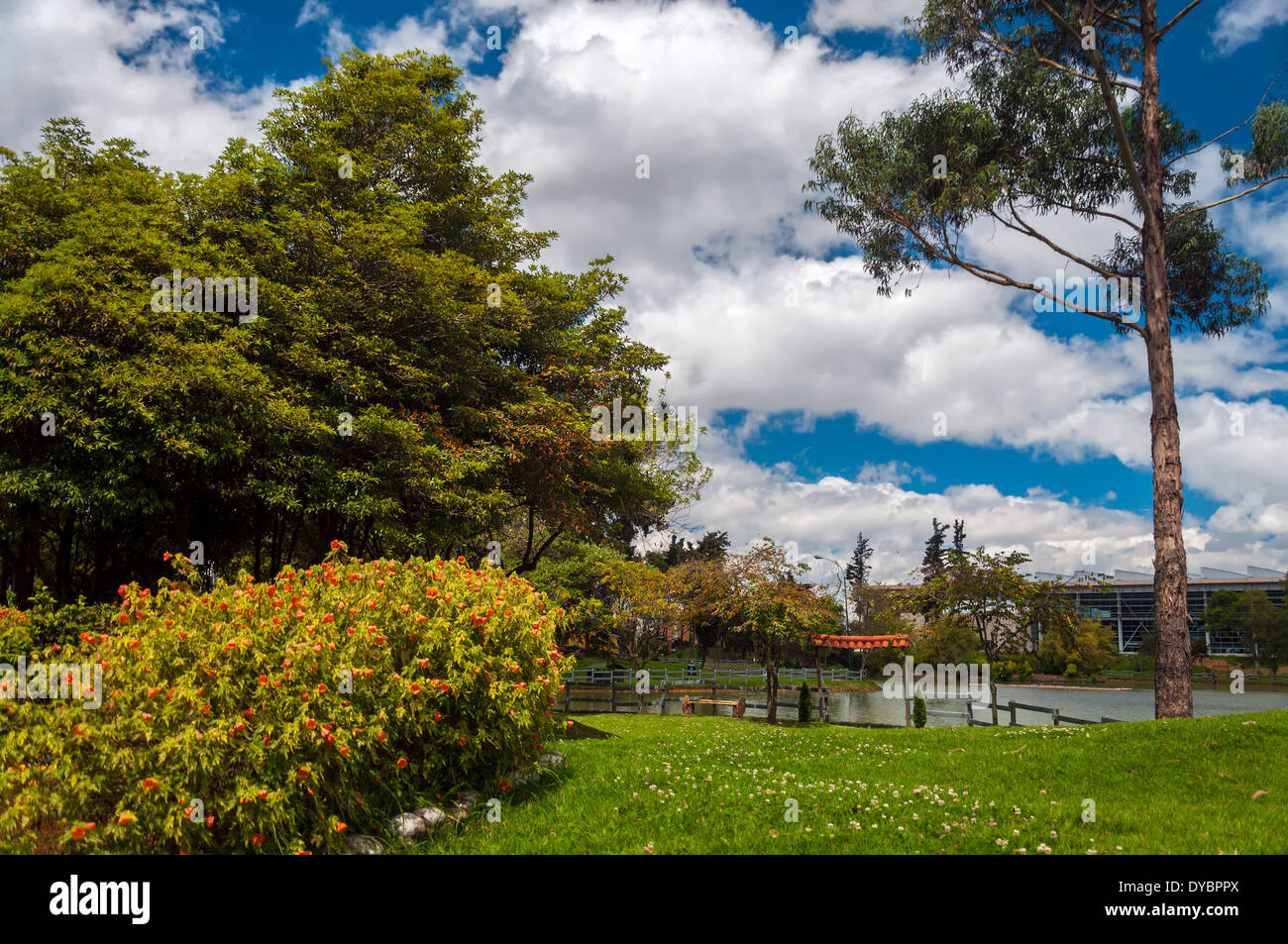View of a lush green park and lagoon - Stock Image