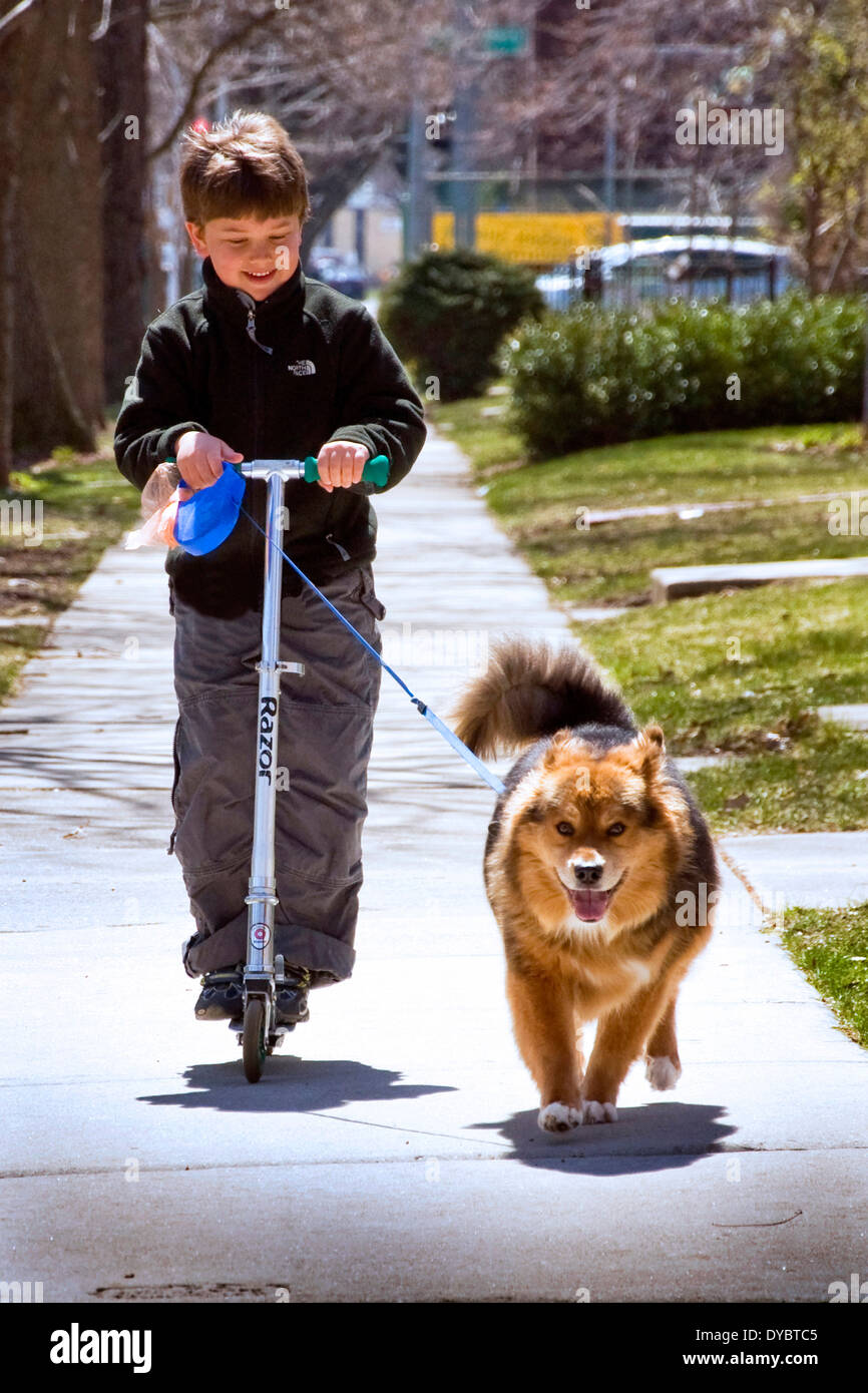 Boy riding a scooter and walking a dog along the sidewalk. - Stock Image