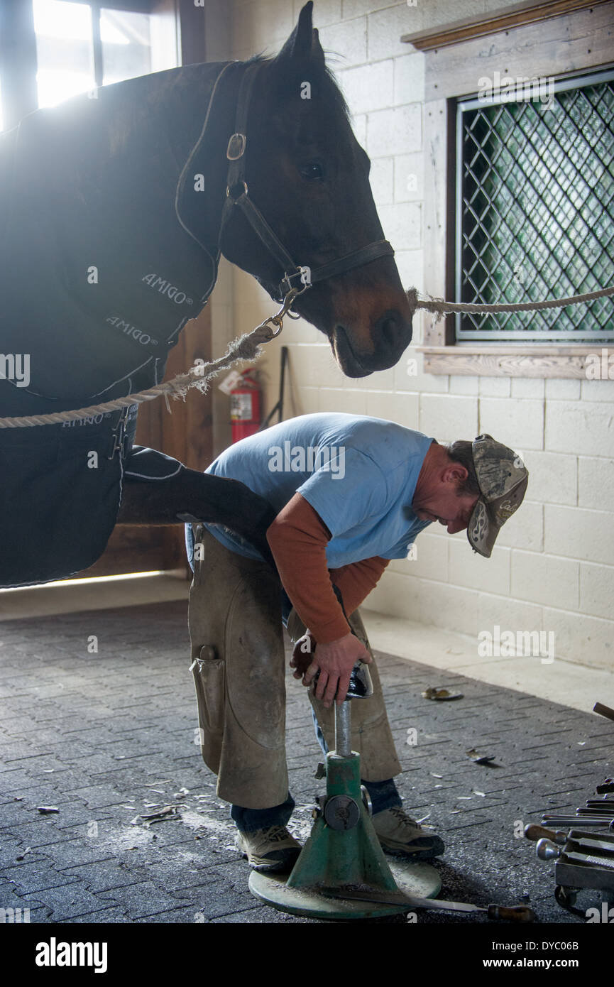 Man tending to horses hooves - Stock Image
