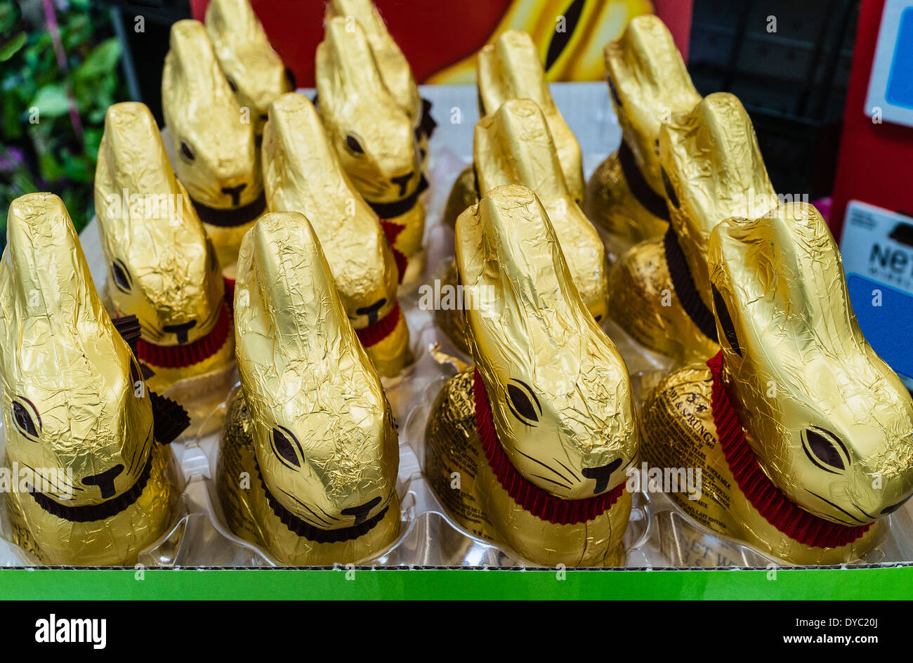Gold foil wrapped chocolate Easter bunnies on display, for sale in a supermarket. - Stock Image