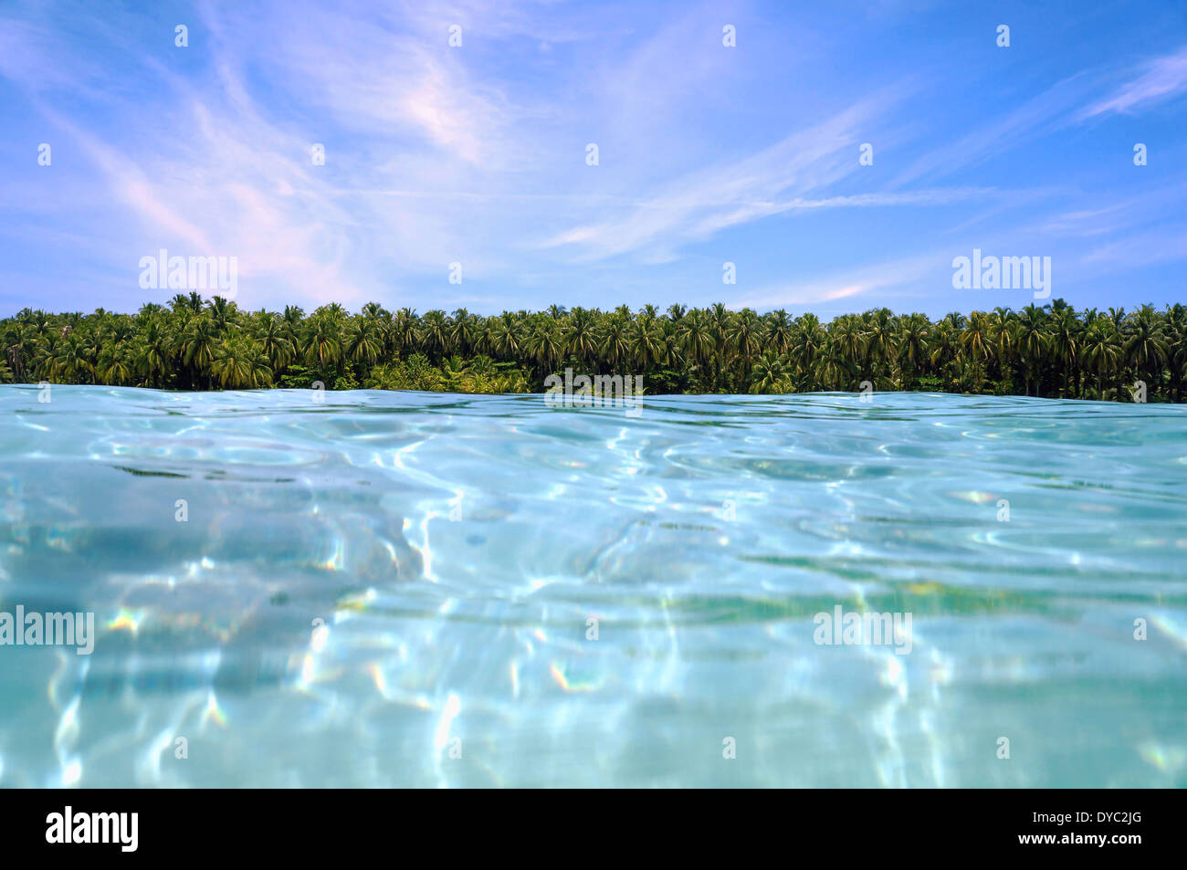 Coconut trees horizon from the water surface - Stock Image