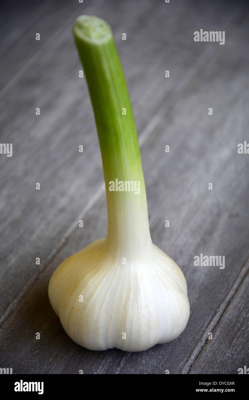 one single garlic bulb on a grey wooden background tabletop eine frische Knoblauch Knolle auf grauem Holztisch Holzbrett Makro Stock Photo
