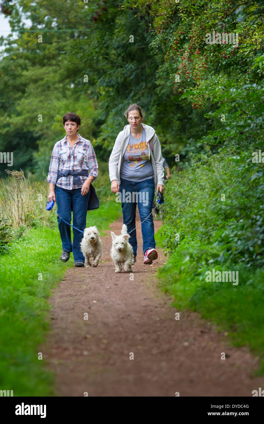 Walking dogs along a canal towpath. - Stock Image