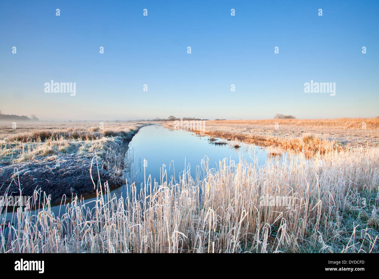 Hoar frosted marshland on the Norfolk broads. - Stock Image