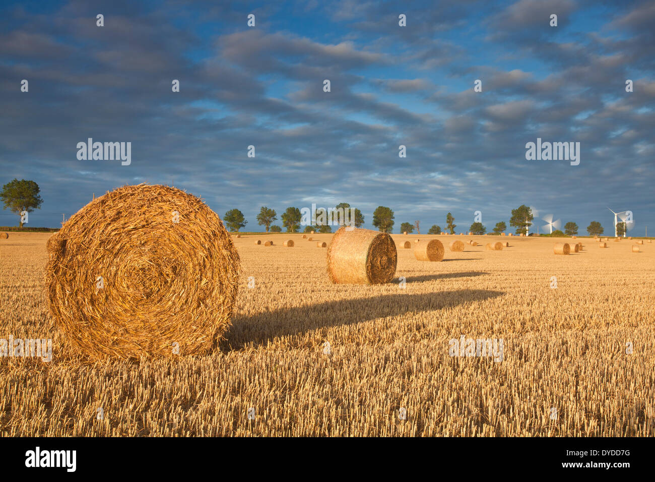 Hay bales at first light in front of West Somerton windfarm in Norfolk. - Stock Image