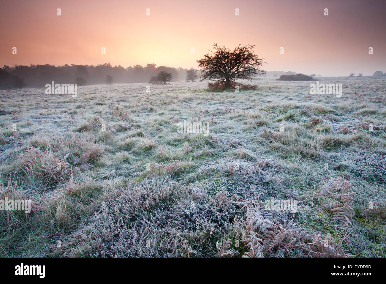 Sunrise over Brettenham Heath on a cold frosty morning on the edge of Thetford Forest. - Stock Image