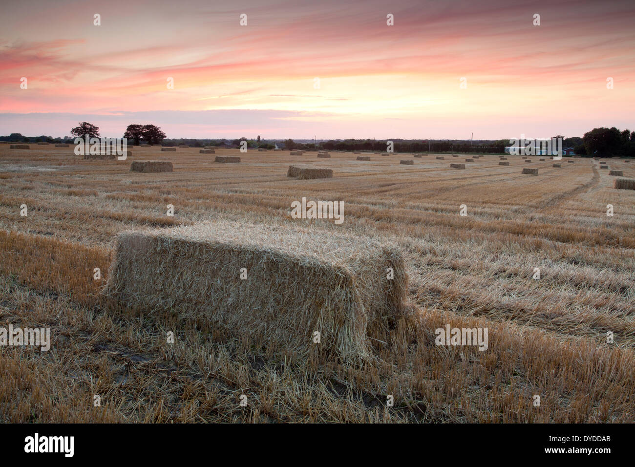 Sunset over farmland in the village of Martham. Stock Photo