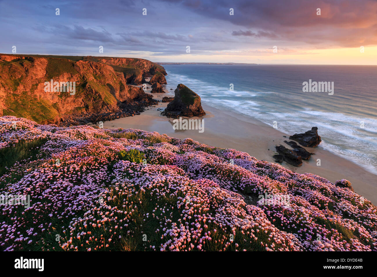 Sunset from the cliff top at Bedruthan Steps in Cornwall with thrift in the foreground. - Stock Image