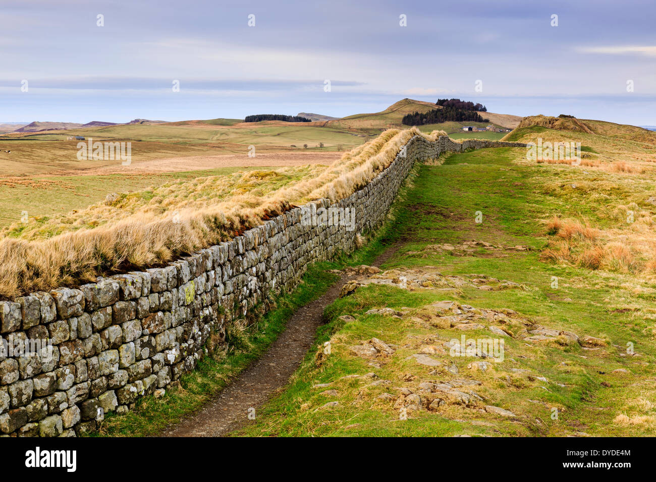 A view along Hadrians Wall near Housesteads Crag in evening light. - Stock Image