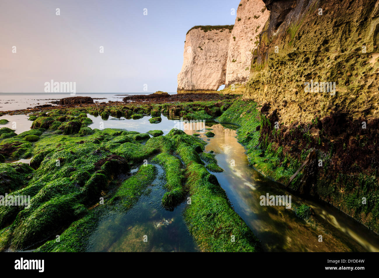 The bottom of the cliffs at Handfast Point on a very low tide. - Stock Image