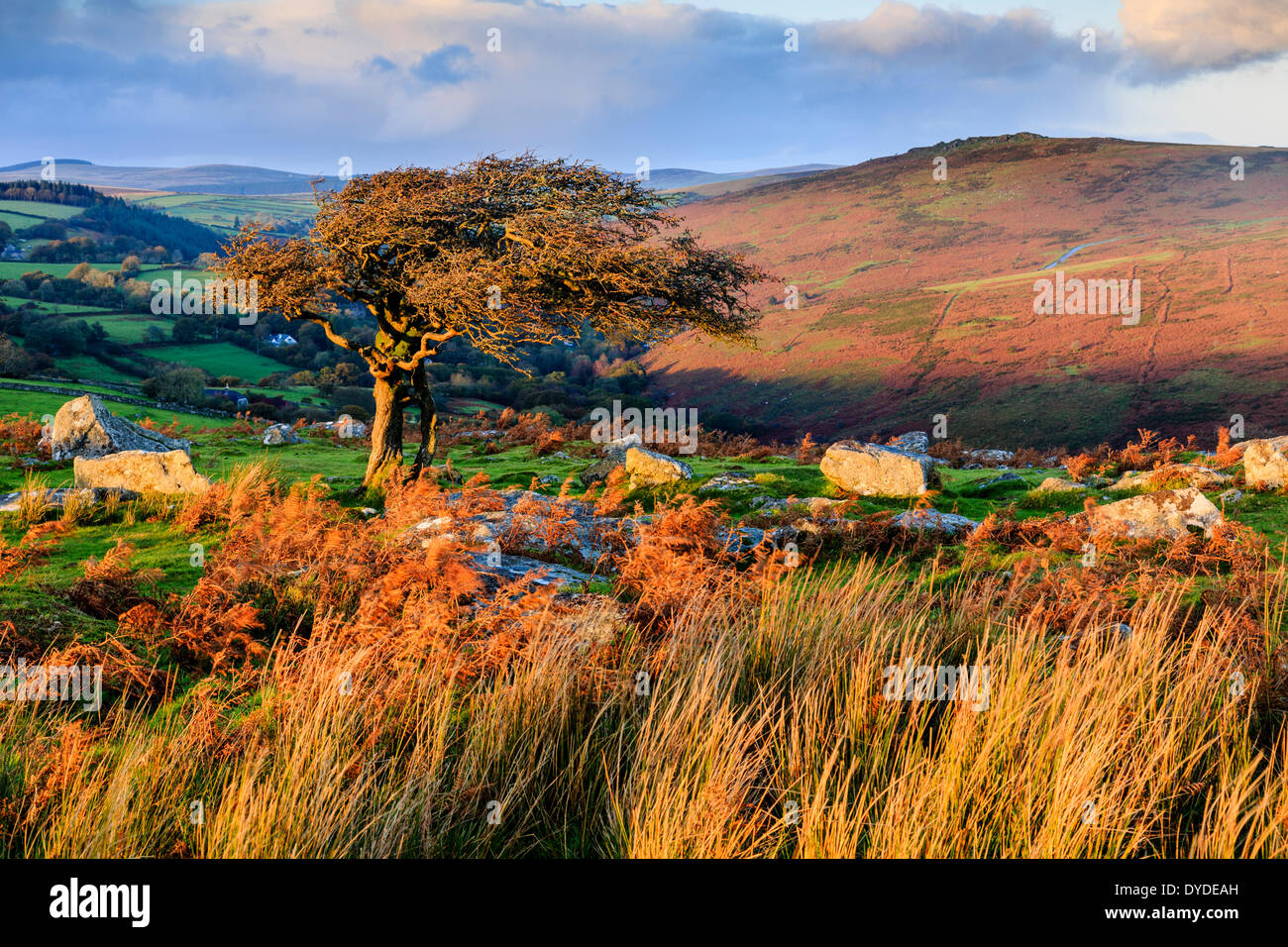 Evening light at Combestone Tor on Dartmoor. - Stock Image